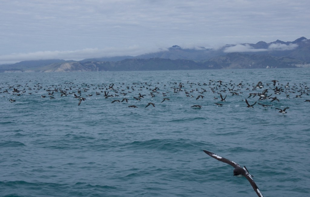 09-2015 Albatross Encounter - 9 of 17